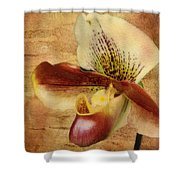 The Lady Slipper Orchid Shower Curtain