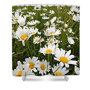 The Land Of White Daisies Shower Curtain