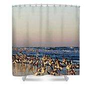 The Landing Shower Curtain