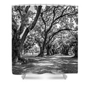 The Lane Bw Shower Curtain by Steve Harrington