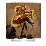 The Last Autumn Rose Before The First Snow Shower Curtain