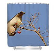 The Last Berries Are For Me Shower Curtain
