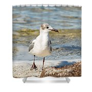 The Laughing Gull Strut Shower Curtain