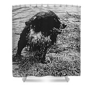 The Laughing Springer Shower Curtain