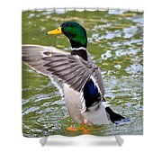 The Leader Shower Curtain