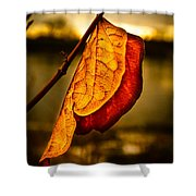 The Leaf Across The River Shower Curtain