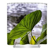 The Leaf Of A Water Plant Shower Curtain