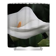 The Legend Of The Calla Lily Shower Curtain
