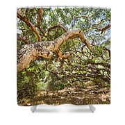 The Life Of Oaks - The Magical Trees Of The Los Osos Oak Reserve Shower Curtain
