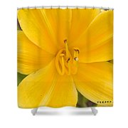 The Lily From Kentucky Shower Curtain