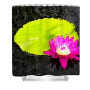 The Lily Pad And Flower... Shower Curtain