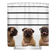 The Line Up Shower Curtain