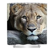 The Lion Queen Shower Curtain