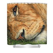 The Lion Sleeps Shower Curtain by David Stribbling