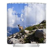 The Little Ibex Shower Curtain