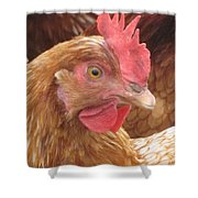 The Little Red Chicken Shower Curtain