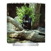 The Lone Chimp Shower Curtain