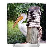 The Lone Pelican Shower Curtain