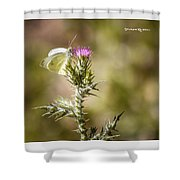The Lonely Butterfly Shower Curtain