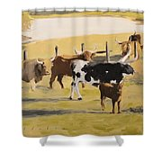 The Longhorn Cows Shower Curtain