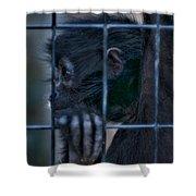 The Look Of Captivity Shower Curtain