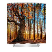 The Lord Of The Trees Shower Curtain by Evgeni Dinev