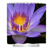 The Lotus Flower - Tropical Flowers Of Hawaii - Nymphaea Stellata Shower Curtain