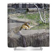 The Lounging Tiger 1 Shower Curtain