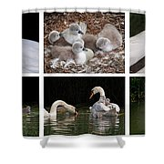 The Magic Of Spring Panorama Shower Curtain