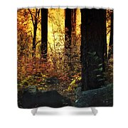 The Magic Of The Forest  Shower Curtain