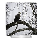 The Majestic Eagle Shower Curtain