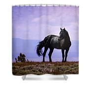 The Majestic Stallion Shower Curtain