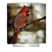 The Male Northern Cardinal Shower Curtain