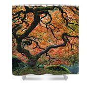 The Maple Tree At Portland Japanese Garden Shower Curtain