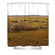 The Marsh At Cape Henlopen Shower Curtain