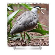 The Masked Lapwing Vanellus Miles Previously Known As The Mask Shower Curtain