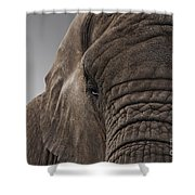 The Meek Mammouth Shower Curtain