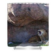 The Mighty King Roars Shower Curtain