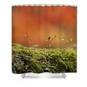 The Miniature World Of Moss  Shower Curtain