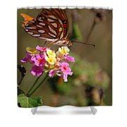 The Monarch 2 Shower Curtain