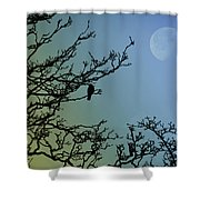 The Morning Moon Shower Curtain