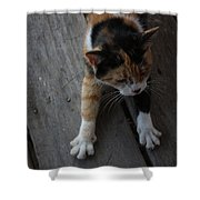 The Morning Stretch  Shower Curtain