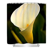 The Morning Trumpets Shower Curtain