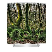 The Mossy Creatures Of The  Old Beech Forest 1 Shower Curtain
