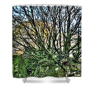 The Mossy Creatures Of The  Old Beech Forest 8 Shower Curtain