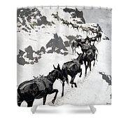The Mule Pack Shower Curtain
