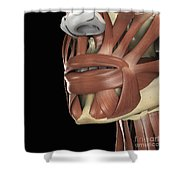The Muscles Of The Mouth Shower Curtain