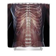 The Muscles Of The Torso Shower Curtain