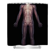 The Musculoskeletal System Rear Shower Curtain