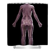 The Nervous And Skeletal Systems Female Shower Curtain